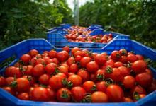 Photo of Tomato price hits record high at Rs 400 a kilo in Karachi